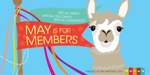 colorful illustration of an alpaca and a maypole with the words may is for members