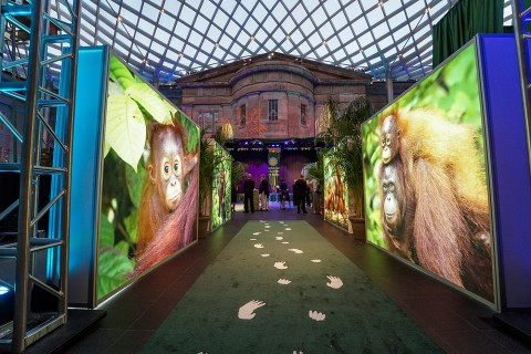 A walkway with animal prints and large photographs at the Smithsonian's National Zoo's Monkey Business Gala