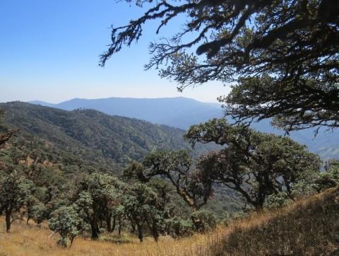 Myanmar forest landscape