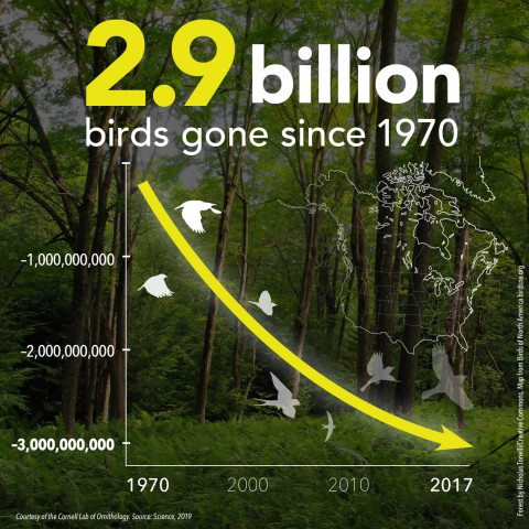 a line graph showing how birds have decreased by over 2.9 million since 1970