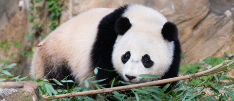Bao Bao in her yard