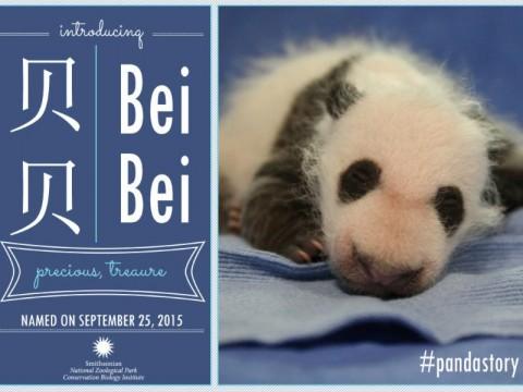 Bei Bei naming announcement