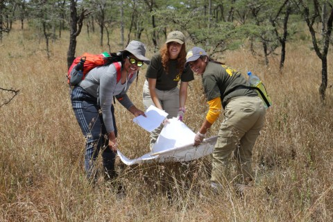 A group of three researchers hold a net and examine it for insects during a field project in Kenya