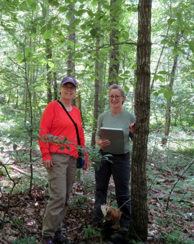 Patty Lane (left) and Kate Heneberry (right) during their survey during which they found four endangered purple fringeless orchids.