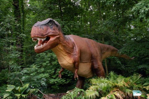 A life-sized animatronic T. Rex.