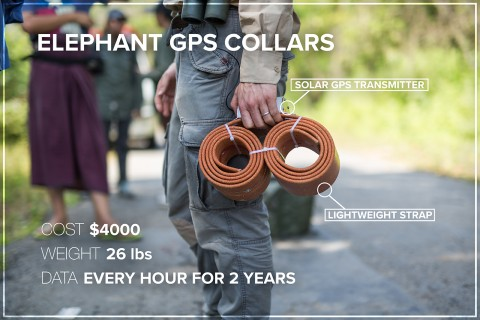 """A researcher holding an elephant GPS collar labeled """"Elephant GPS collar, solar GPS transmitter, lightweight strap, cost $4,000, weight 26 lbs, data every hour for 2 years"""""""