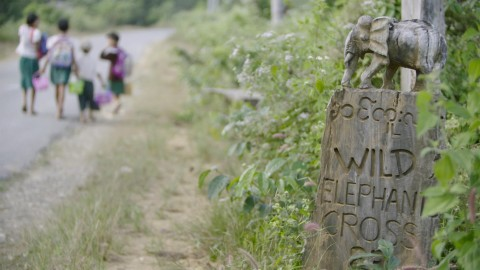 """A wooden carved sign on the side of the road in Myanmar. An elephant is carved and stands atop the words """"Wild elephant cross"""""""