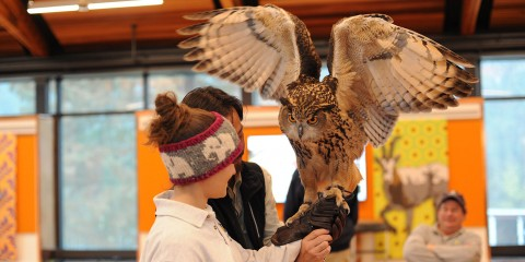 A large owl with its wings spread perches on a girl's gloved hand, while a bird expert helps