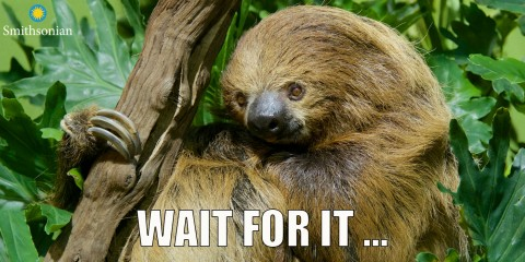 """A meme of a sloth holding onto a branch with the text """"Wait for it ..."""""""
