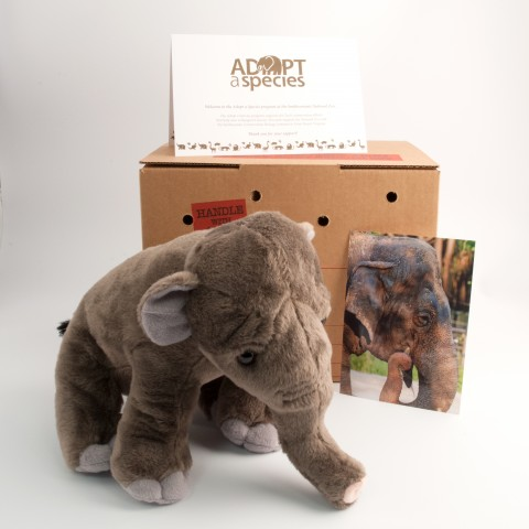 Asian elephant plush toy, shipping box, note card, and photo