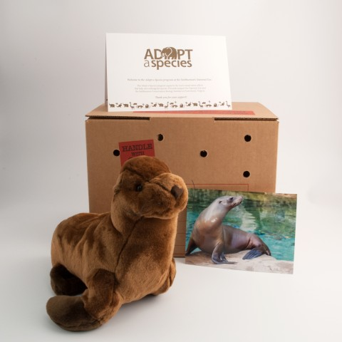 sea lion plush toy with shipping crate, note card, and photo