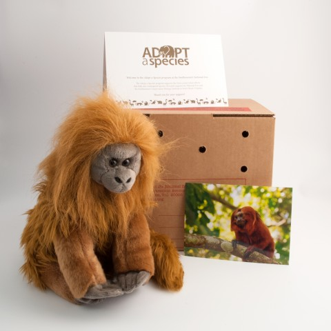 golden lion tamarin plush toy with shipping box, photo, and note card