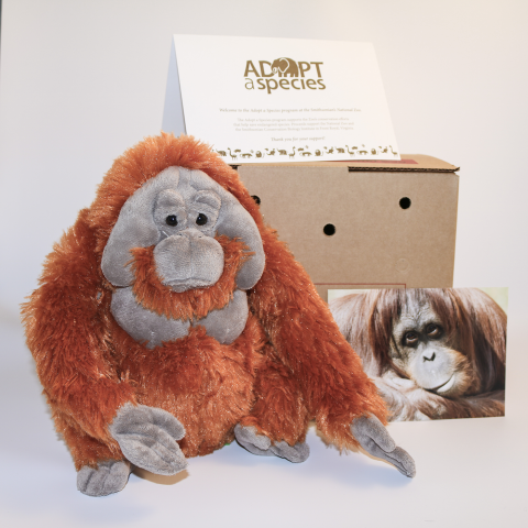 adopt package for orangutan includes a plush stuffed animal, a photo, a cardboard carrier and an adoption certificate