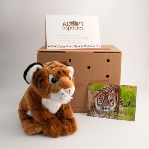 tiger plush toy with shipping crate, note card, and photo