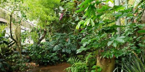 Amazonia rainforest exhibit