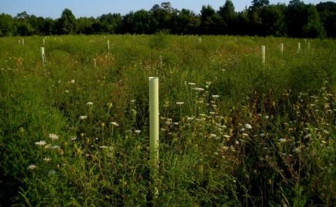 BiodiversiTree Plot