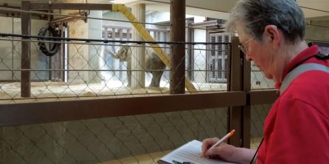 A Behavior Watch Volunteer records data on an elephant