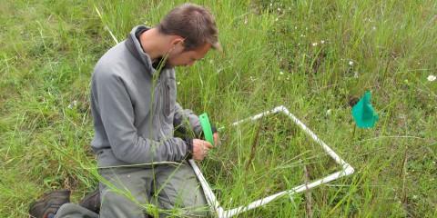 Ecology volunteer in the field