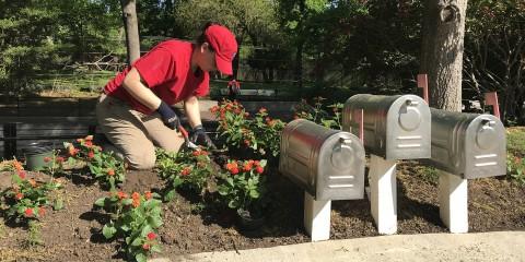 Horticulture Volunteer planting flowers