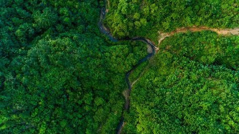 Aerial photo of a green forest in Myanmar with a river