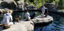 A sea lion demo at the Smithsonian's National Zoo