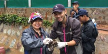 Dr. Yaoyao Mathura and Dr. Marc Valitutto examine an endangered big-headed turtle