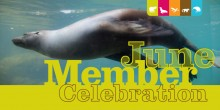 artwork with the words june member celebration and background photo of California sea lion swimming