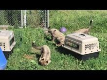 Cheetah Cub Treats