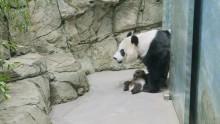 #PandaStory: Field Trip
