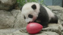 #PandaStory: Tumbles and Toys