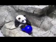 #PandaStory: A Panda With Personality That Shines