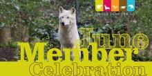 June Member Celebration Artwork