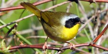 small, yellow bird perched on a tree branch