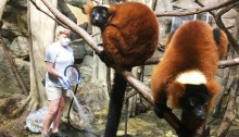 Small Mammal House keepers clean the lemur exhibit.
