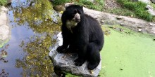 Quito at the Zoo Duisburg in Germany