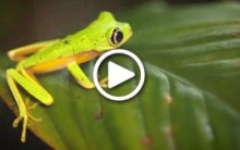 Saving Frogs with Science