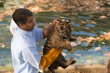 keeper holding tiger cub near water