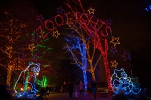 "The main entrance to ZooLights at the Smithsonian's National Zoo, featuring trees wrapped in holiday lights, light-up pandas and a lit sign that says ""ZooLights"""