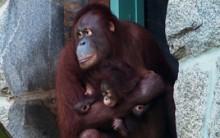 Batang holding Redd at Think Tank.