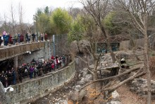 A crowd of visitors watches giant panda Bei Bei during the Giant Panda Housewarming Celebration at the Smithsonian's National Zoo