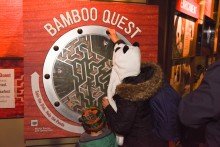 An adult and child play the Bamboo Quest maze game inside the Panda House during the Smithsonian's National Zoo's Giant Panda Housewarming Celebration