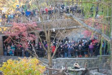 Two levels of crowds look on as Giant panda Bei Bei sits on a hammock