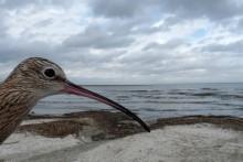 Smithsonian-tracked Ghost Bird Takes Flight