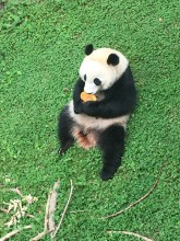 Bei Bei eating a frozen fruitsicle