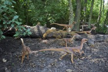 A group of small, animatronic dinosaurs in a wooded area
