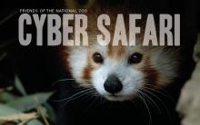 red panda with title Cyber Safari