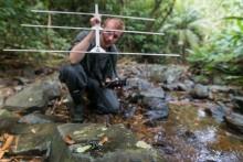 Smithsonian-Mason School of Conservation Ph.D. student Blake Klocke uses a radio transmitter to track 16 Limosa harlequin frogs