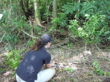 Releasing a Guam rail to the wild.