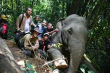 Elephant Team Photo