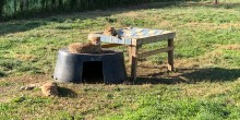 "Three of Cheetah Echo's cubs sit in their yard on some ""furniture"", including a new firehose bed."